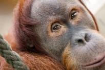 Mensch und Affe: Sind sie denn nicht wie wir?