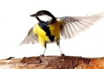 Ornithologie 2016: Die Vögel in Nachbars Garten
