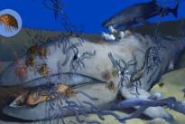 Walsterben: Ein Festmahl tief am Meeresgrund