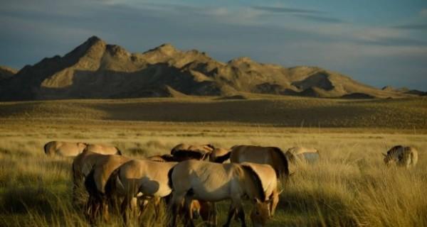 Genanalysen  an Wildpferden und Stichlingen zeigt: Evolution auf der Überholspur