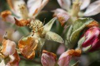 Klimawandel treibt Obstbauern und Winzer zu Versicherern