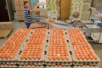 Belastung mit Fipronil: Deutschland blockiert Veröffentlichungen zum Eier-Skandal