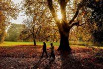 Herbstliche Nüsse und Früchte: Waldspaziergang mit leckeren Snacks