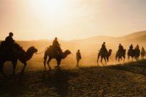 Wüsten-Nutztier: Von der Schönheit der Kamele