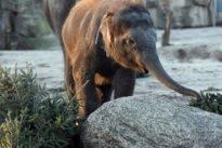 Tiergärten: Hinter dem Gitter die ganze Welt