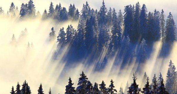 Heilendes Grün: Eine Dosis Wald