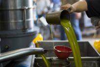 Stiftung Warentest: Gutes Olivenöl meist nicht unter 24 Euro pro Liter zu haben