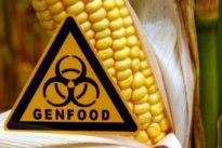 Sanfte Biotechnologie: Die Gentechnik im Hoffnungslauf