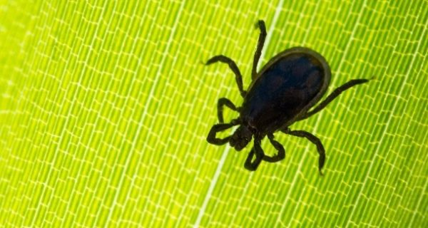 Zeckenforscher warnen: FSME-Infektionen breiten sich nach Norden aus