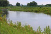 Trotz besserer Wasserqualität: Deutsche Flüsse in schlechtem Zustand
