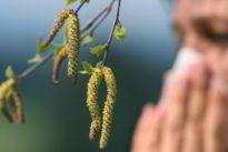 Temperaturanstieg: Leidenszeit für Allergiker – massiver Birkenpollenflug erwartet