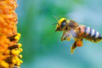 Bienenforschung: Nur das Beste für den Nachwuchs