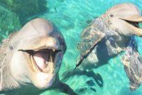 Delfine: Ich heiße Flipper