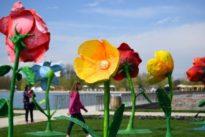 Ellwangen bekommt Blumenschau: Landesgartenschau gegen Flüchtlingshilfe?