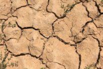 """Dürre in Deutschland: """"Die meisten Bauern hier kämpfen um die Existenz"""""""