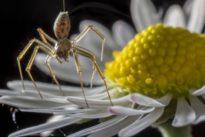 Fliegende Spinnen: Air Arachno