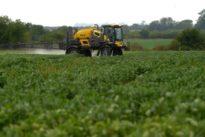 Bayer und Glyphosat: Ein Pestizid schadet seinem Konzern