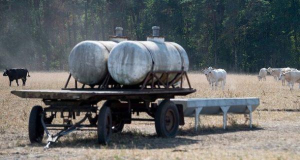 Hilfe für Landwirte?: Cool bleiben, Bauern!