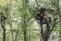 Hambacher Forst: Öko-Kämpfer im Baumhaus