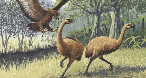 Wo sind die Vögel Neuseelands?: Der große Hunger im Vogelparadies