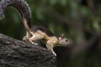 Killerviren auf dem Vormarsch?: Der Teufel ist ein Eichhörnchen