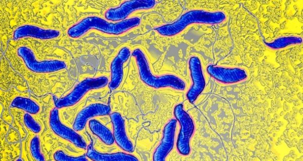 Krebs durch Bakterien: Viel mehr als nur lästig