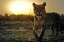 Artensterben: Wer seid ihr – und wie lange noch?