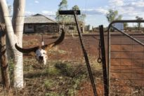 Nano-Zellulose aus dem Outback: Wüstenkondome