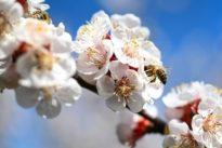 """Interview mit Syngenta-Chef: """"Lassen Sie uns über Bienen reden"""""""