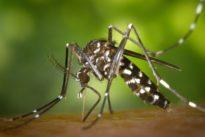 Klimawandel: Tropische Mücken und Zecken rücken nach Norden vor