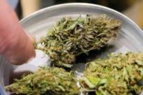 3,4-Milliarden-Deal eingetütet: Nächste Übernahme auf dem Marihuana-Markt steht bevor