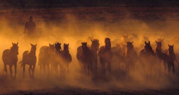 Die Geschichte der Pferdezucht: Alles Glück der Erde!