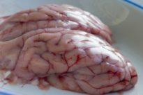 Wiederbelebtes Schweinehirn: Überrumpelt