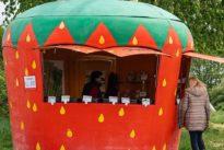 Direktvermarktung: Budenzauber für Spargel und Erdbeeren