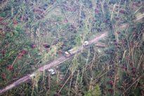 Waldsterben in Deutschland: Totes Holz, überall