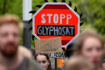 Unkrautvernichter: Klöckner erwartet Glyphosat-Verbot erst 2022