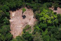 Wegen Abholzung am Amazonas: Bundesregierung stoppt Waldprojekte in Brasilien